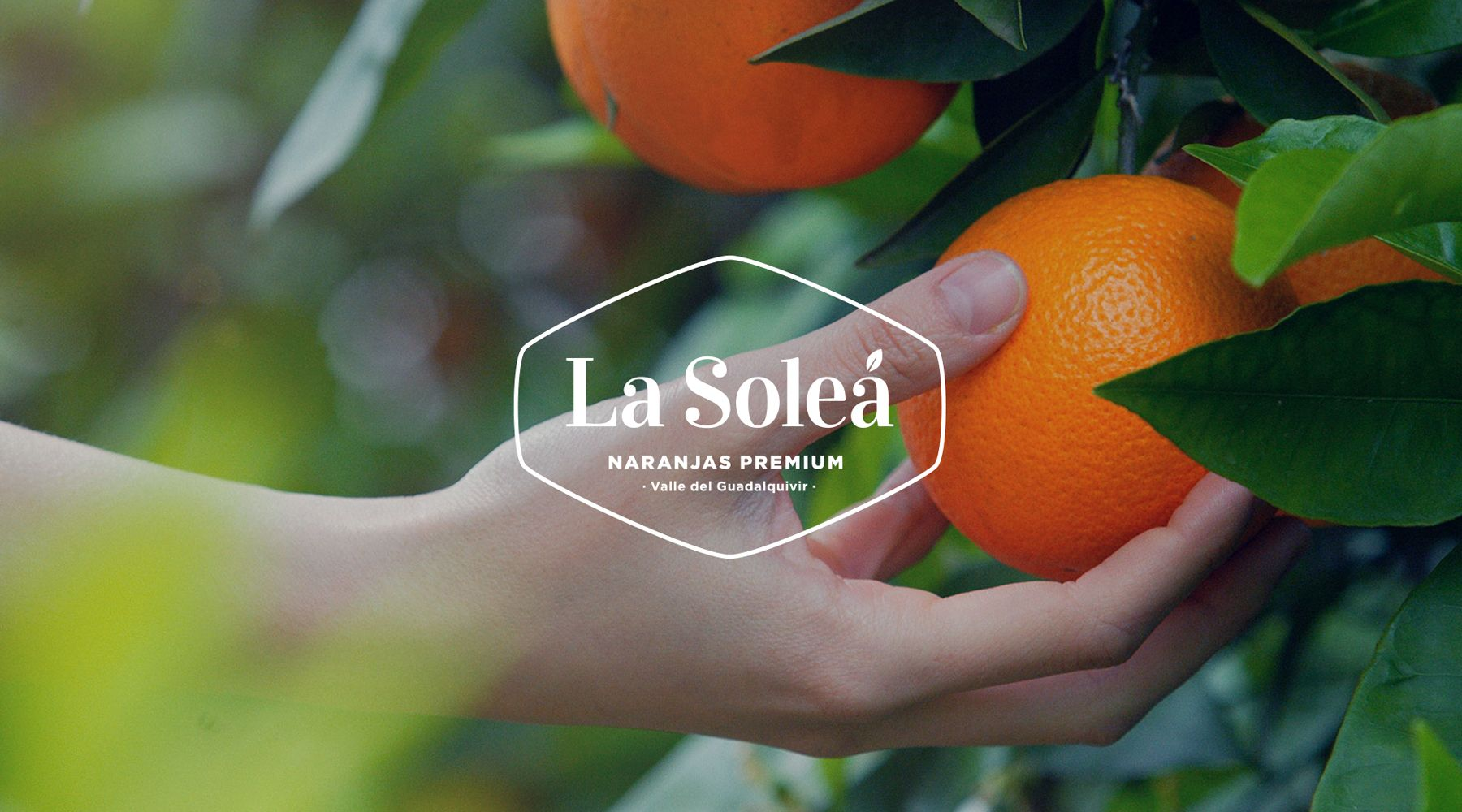 Logo of oranges La Soleá